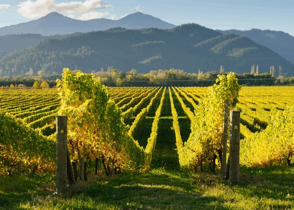 8 Best Wine and Cycling Tours in New Zealand