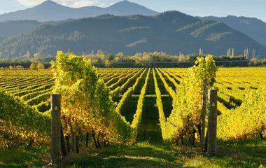 6 Best Wine and Cycling Tours in New Zealand
