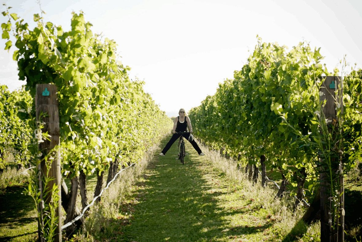 Cycling fun in the grape vines