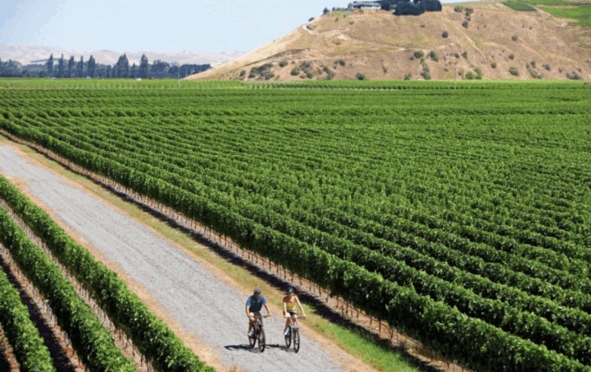 Epic Vineyard Biking