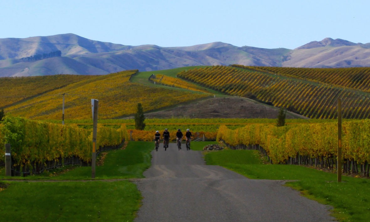 Wine trail cycling tour Marlborough, South Island NZ