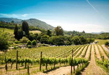 Easygoing E-Bike Tour: California Wine Country