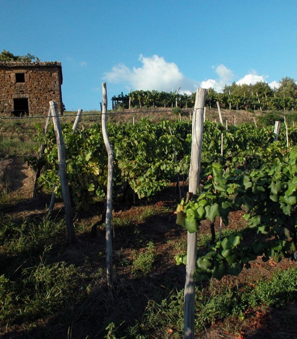 Never tire of the gorgeous views filled with vineyards, olive groves and historic buildings.