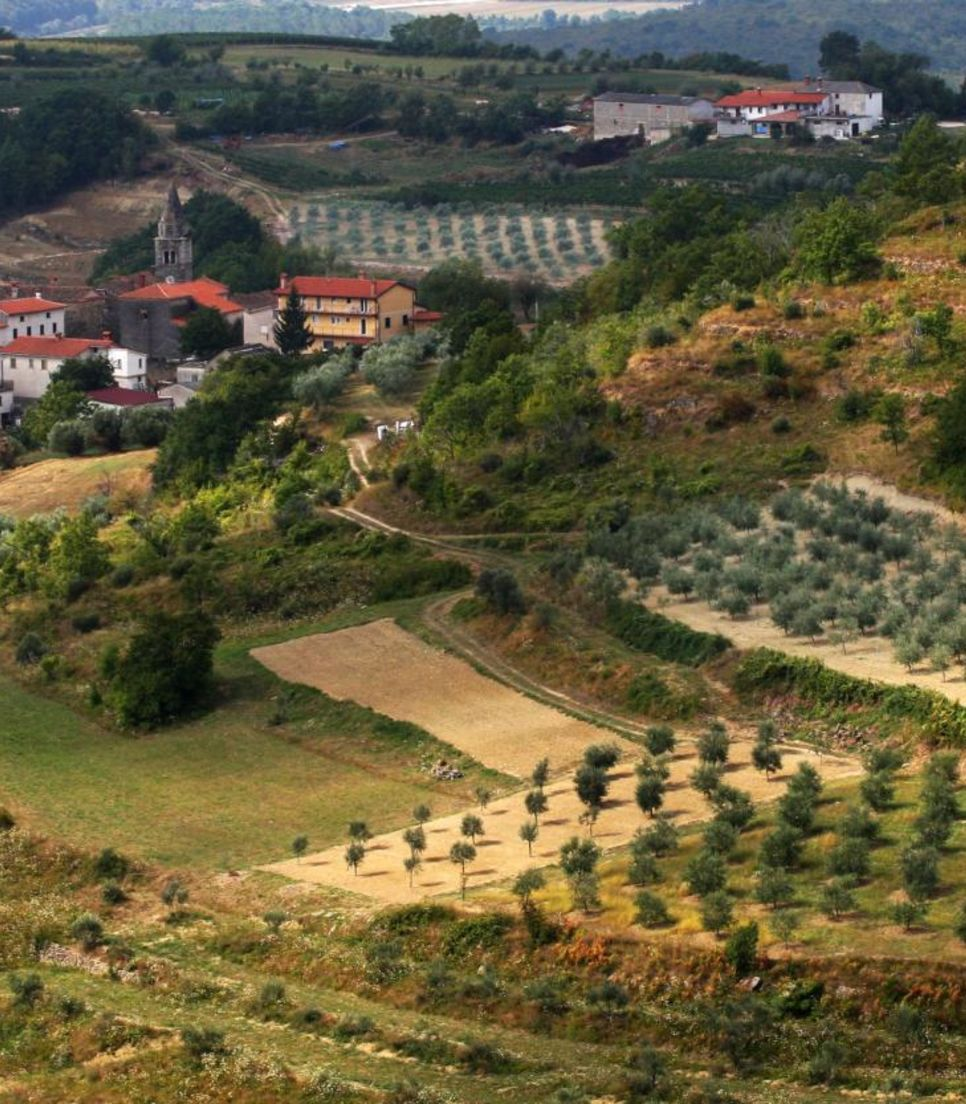 Find out how olive oil is made and have a taste too