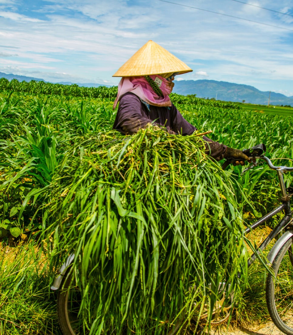See the ingenious ways that Vietnamese use their bike