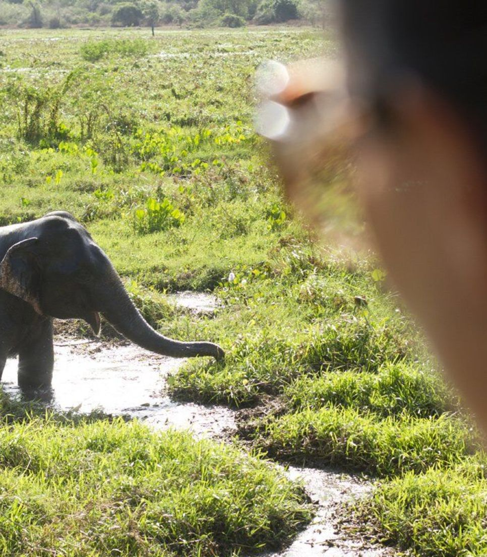 See elephants, deer, buffalo and perhaps even a leopard at the stunning national park