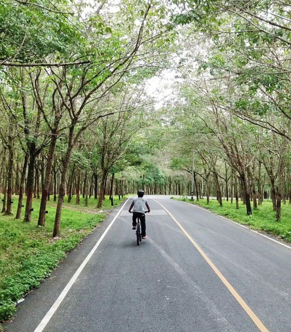 Pedal on the smooth quiet roads through the lush scenery