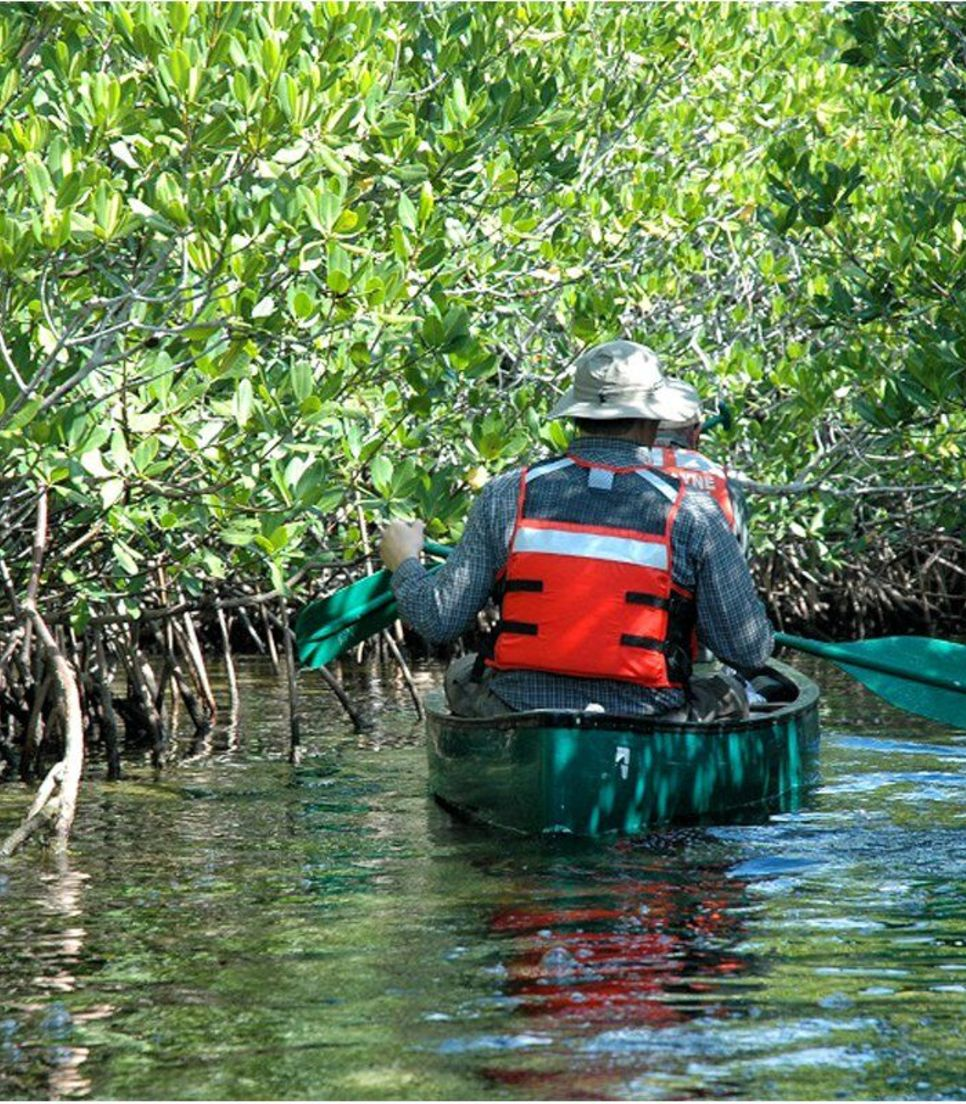 Gracefully paddle through the lush vegetation and mangroves, looking out for red crabs as you go