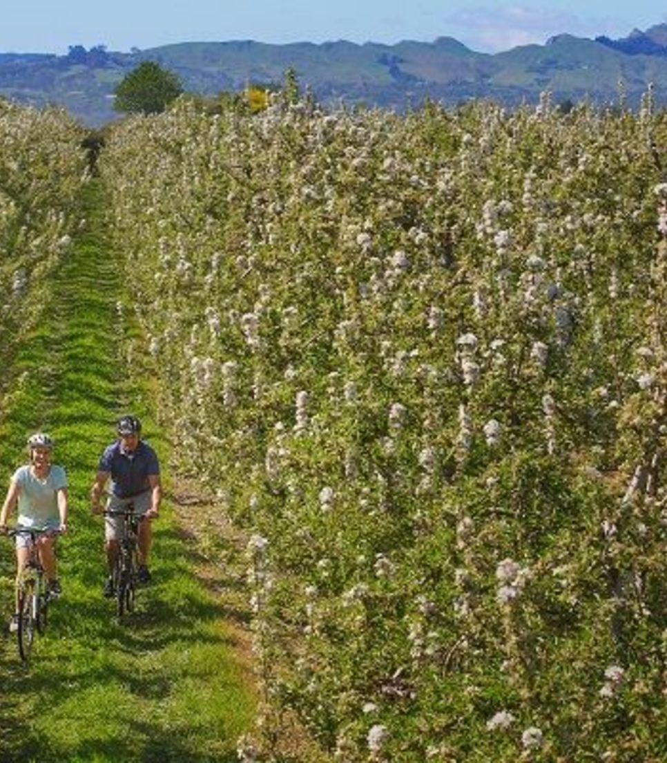 Leisurely bike through stunning orchards and the fertile lands of this wonderful area