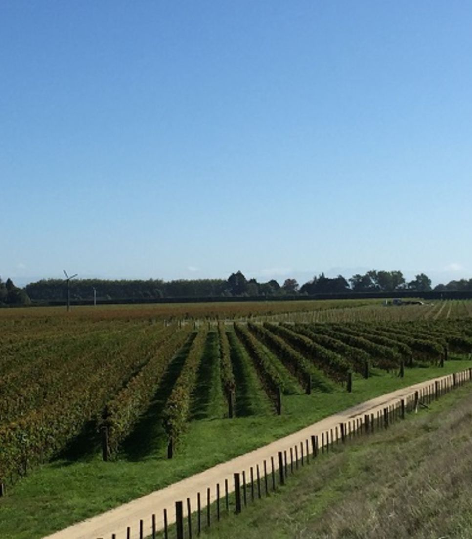Ride through the green and pleasant landscape, stopping off at vineyards that take your fancy