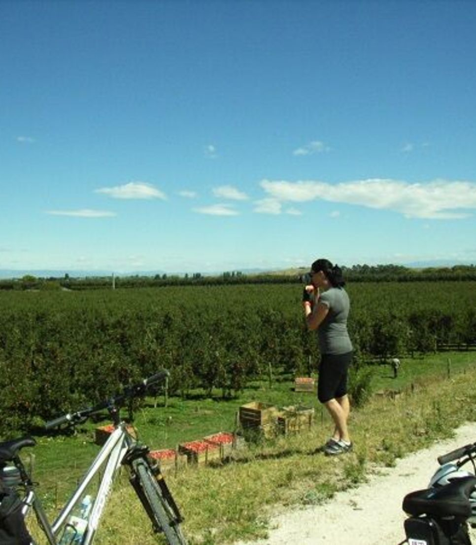 Enjoy the fantastic green vistas that surround you as you leisurely cycle through Hawke's Bay
