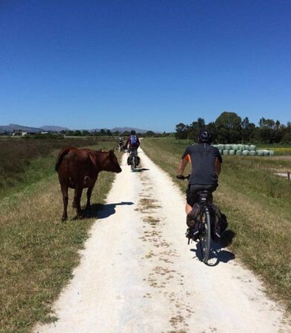 Enjoy the serenity of the countryside and the cheeky cattle you may meet along the way