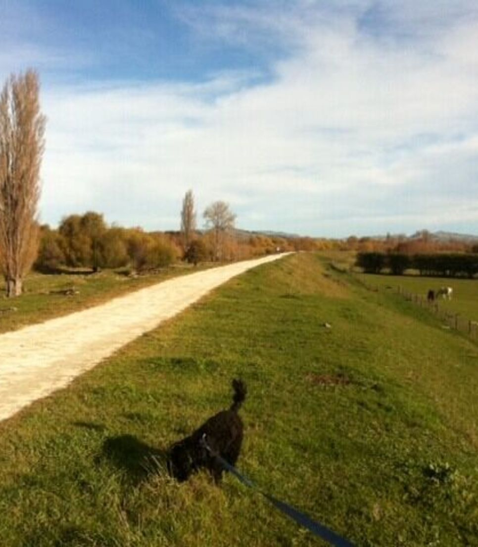 Embrace the local area and its extensive and well maintained trails, delightful for cycling