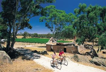 Tour de South Australia Vineyards