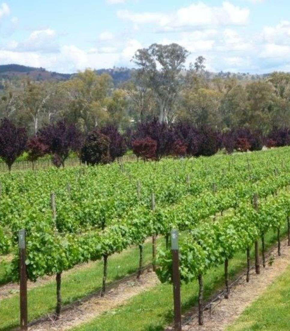 Immerse yourself in the natural splendour of your surroundings and sip your way around the wineries