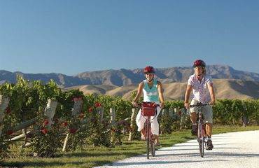 Couple cycling next to vineyard