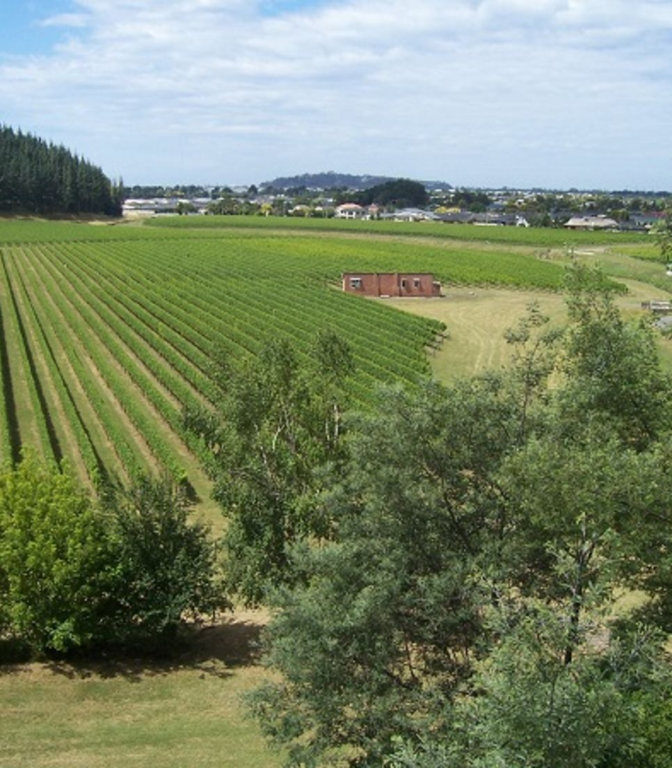 Spend time exploring the wonderful viticulture of Hawke's Bay