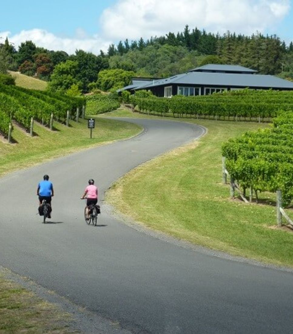 Visit fantastic wineries along scenic roads with easy riding