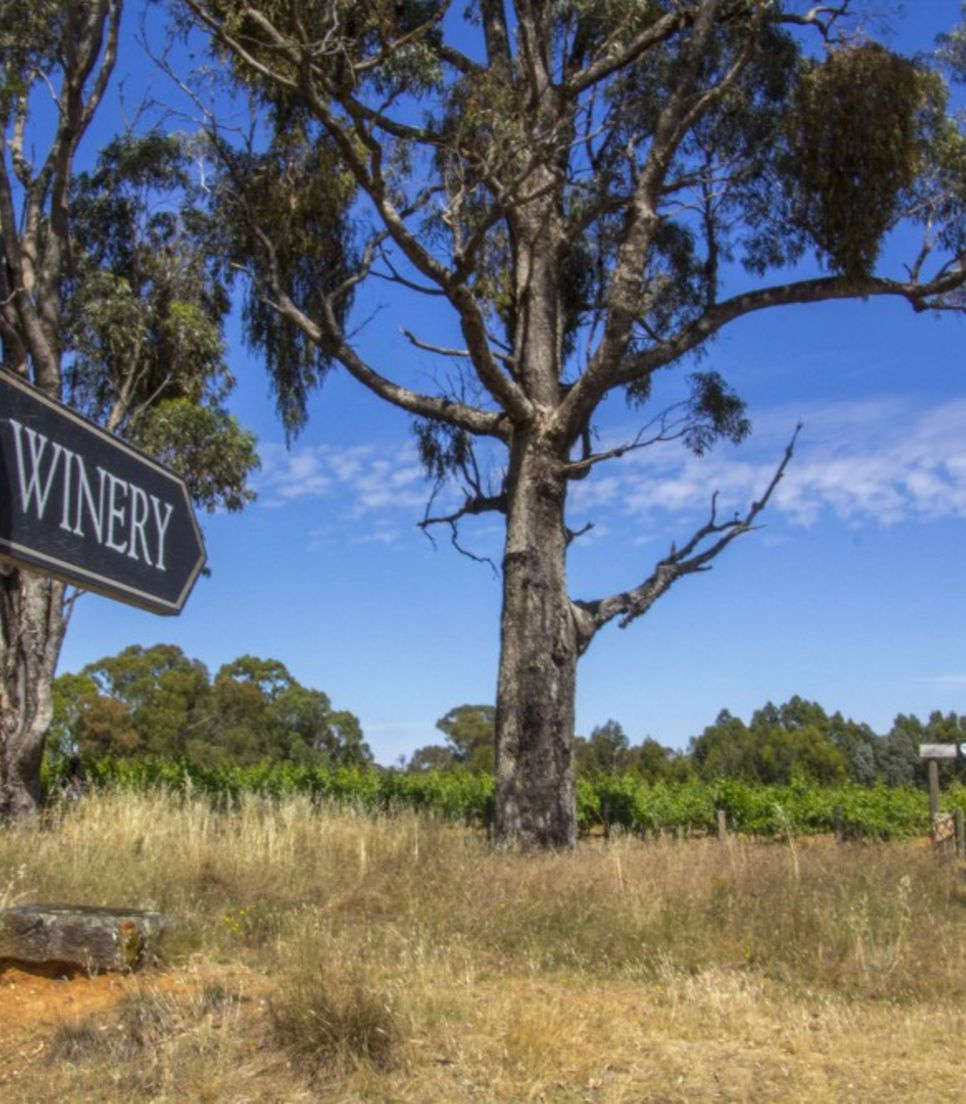 Follow the directions given or the clear signs along the route to take advantage of the wonderful wineries