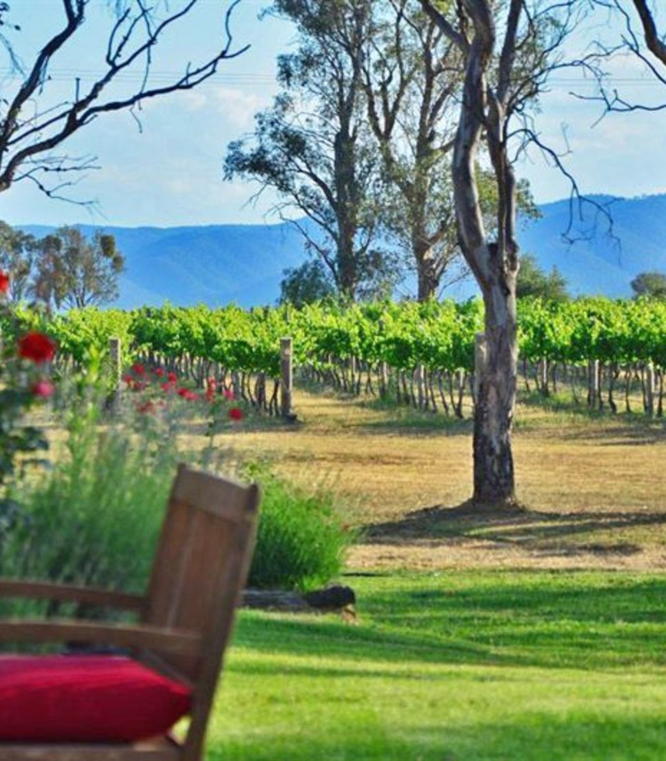 Enjoy the views and the wine on this tour of Mudgee