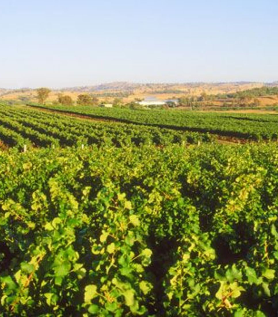 Soak up the landscape and the wine as you roam through this lovely region