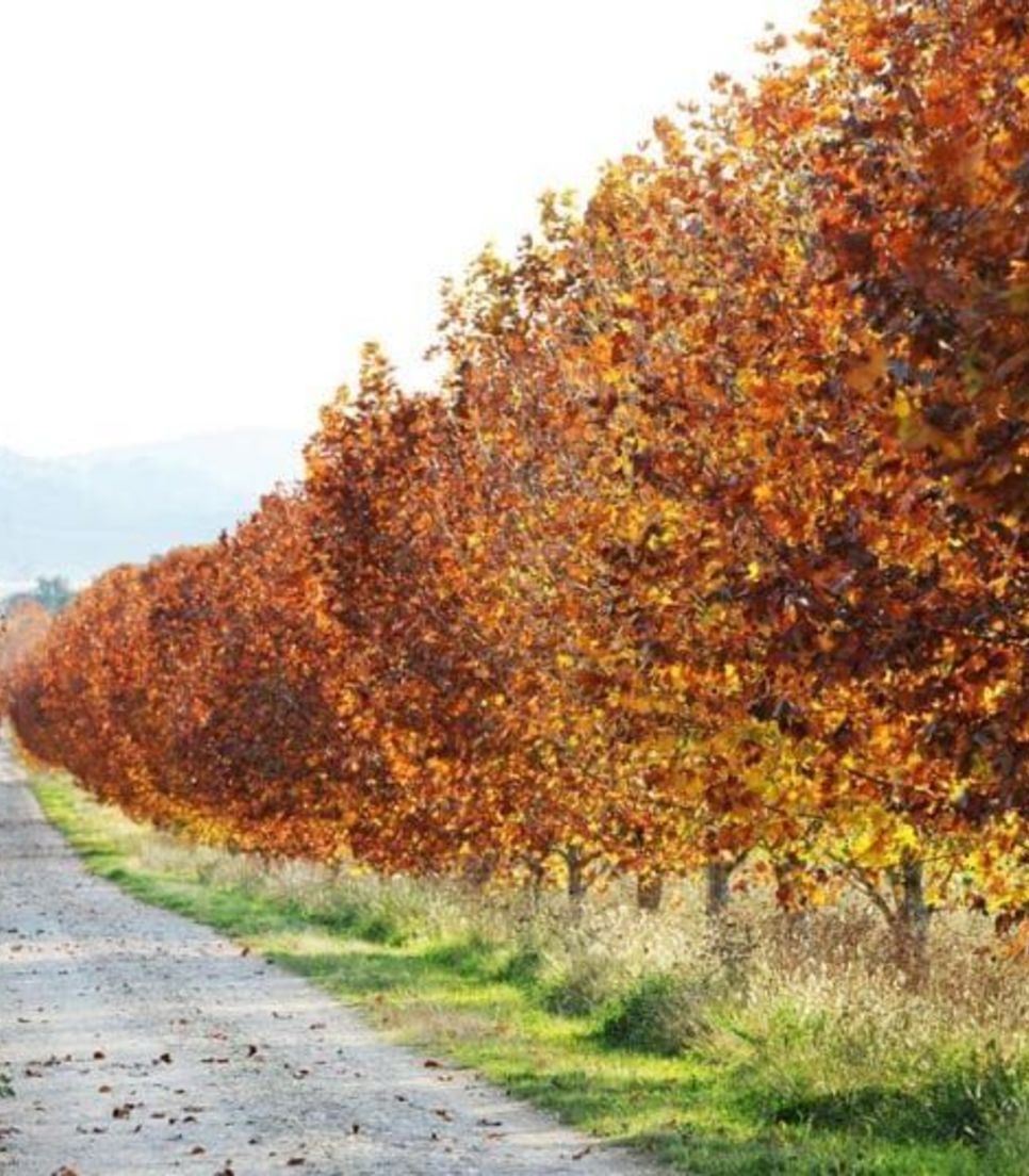 Enjoy the seasonal displays of colour and change as you cycle this lovely landscape