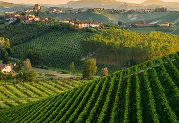 Piedmont Vineyards and Ligurian Sea