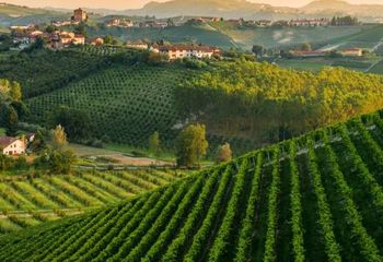 Piedmont Vineyards and Ligurian Sea