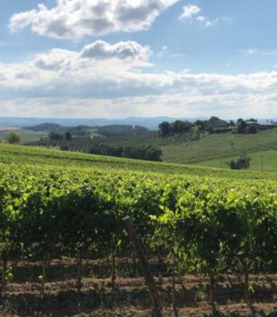 Experience these glorious Italian vineyards and sample the produce