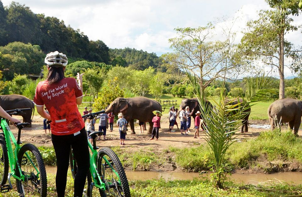 Chiang Mai Elephant Tracks