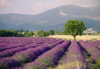 Tour de Provence Luberon