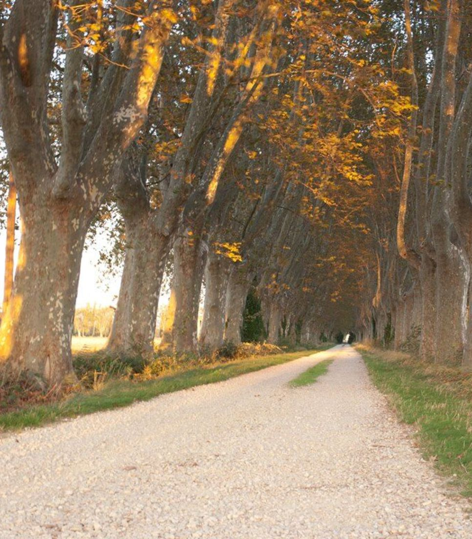 Explore the quiet lanes and countryside of southern France