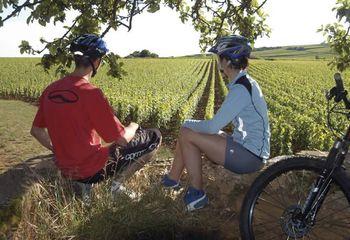 Tour de Burgundy Vineyards