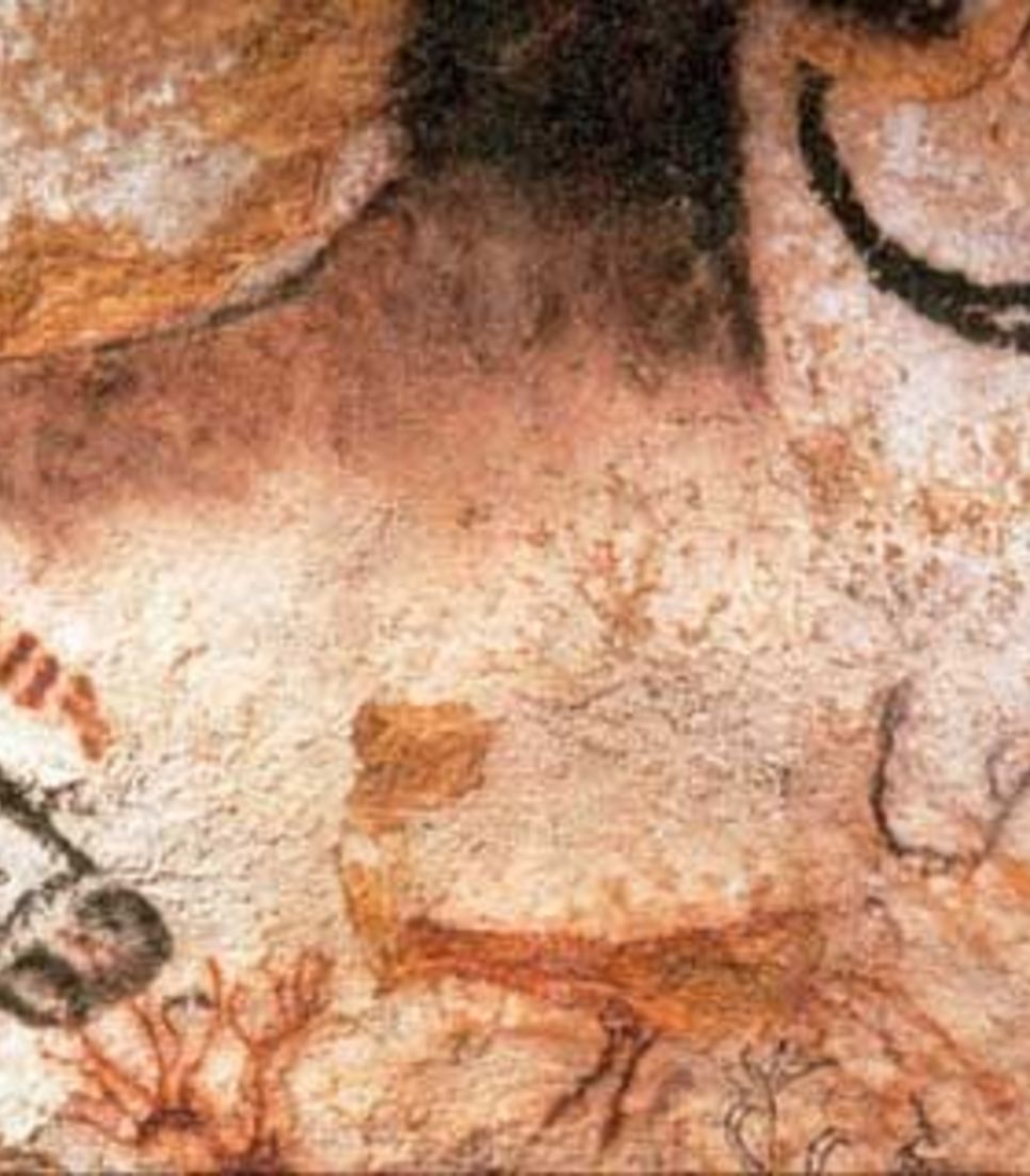Discover the ancient images adorning the cave walls