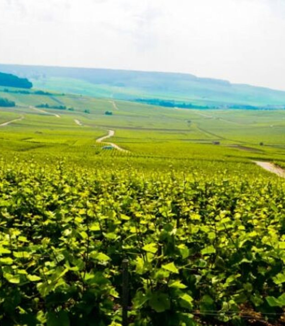 Cycle through Champagne and explore the verdant scenery