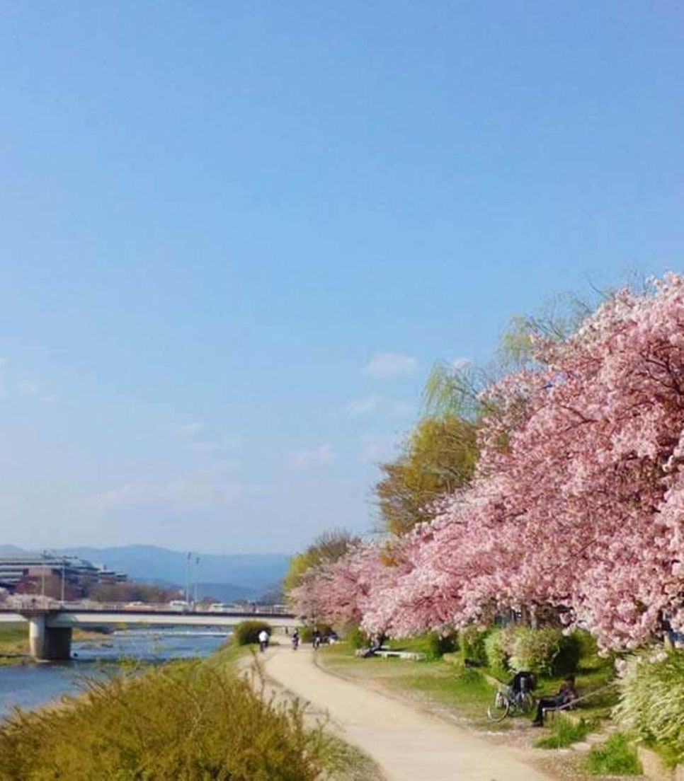 If you take this tour at the right time of year, you can experience the cherry blossoms first-hand