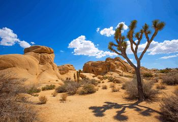 California Bicycle Tours: Palm Springs and Joshua Tree National Park