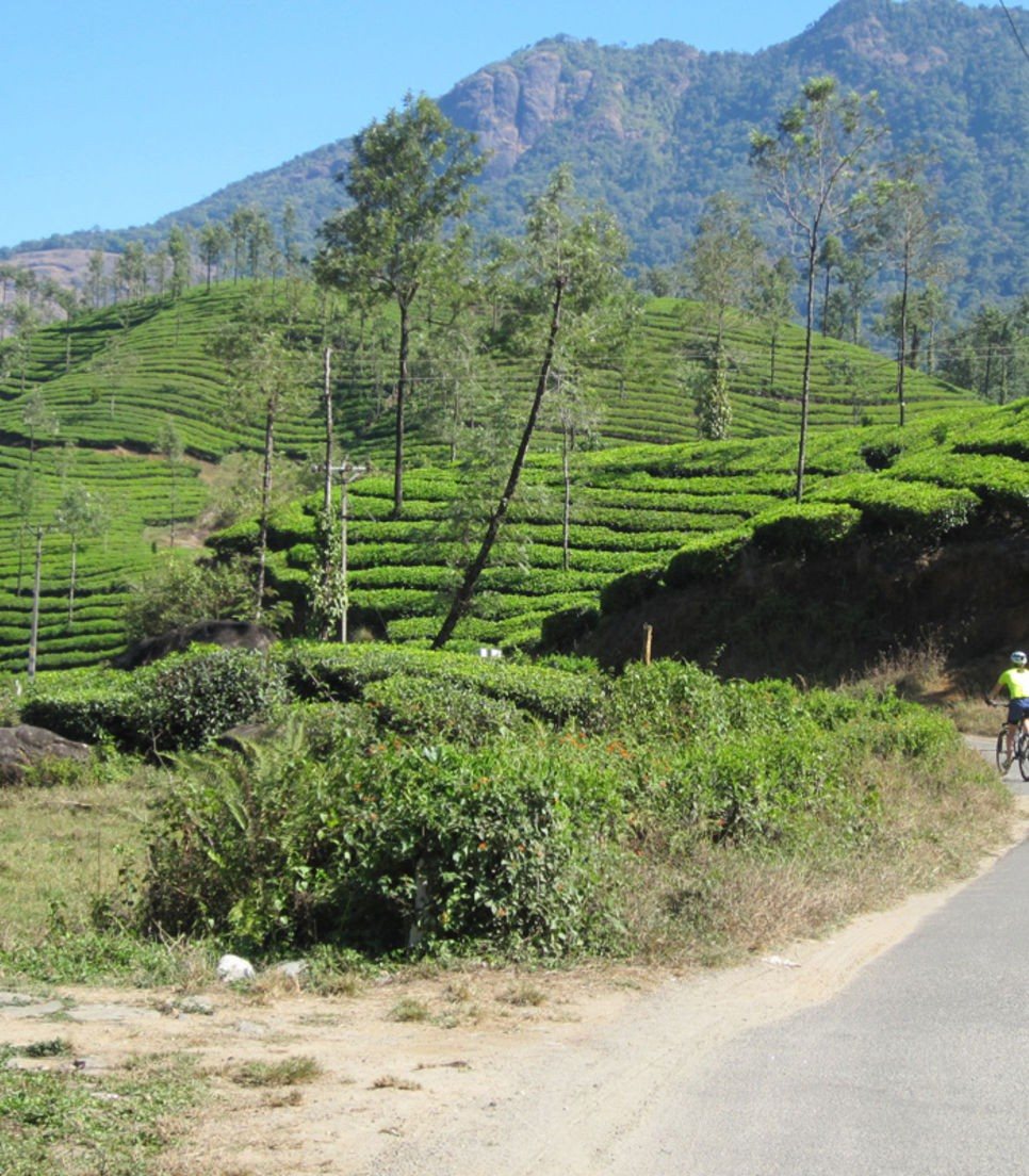 Enjoy the views of lakes, reservoirs, forest and tea plantations