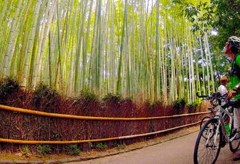 Cycle Kyoto to the Coast - Self Guided