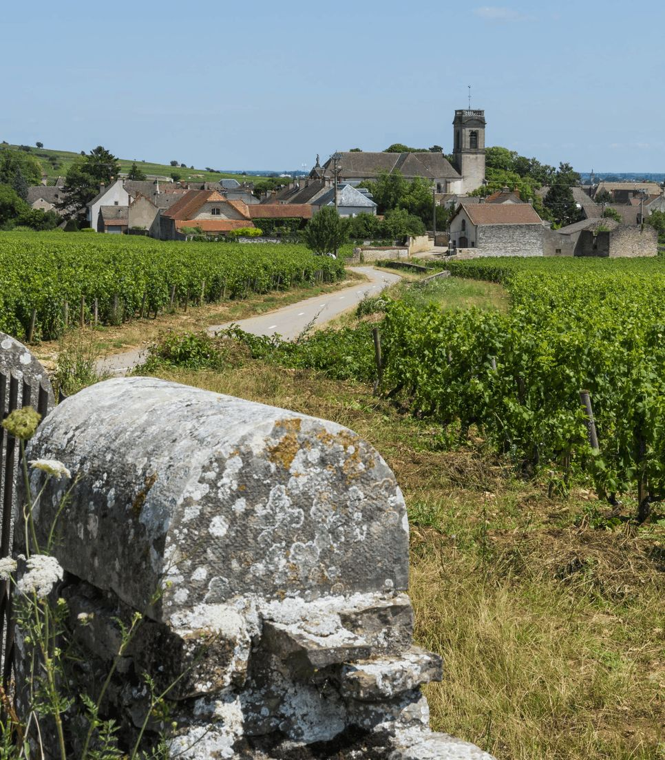 Explore this beautiful wine producing region of France
