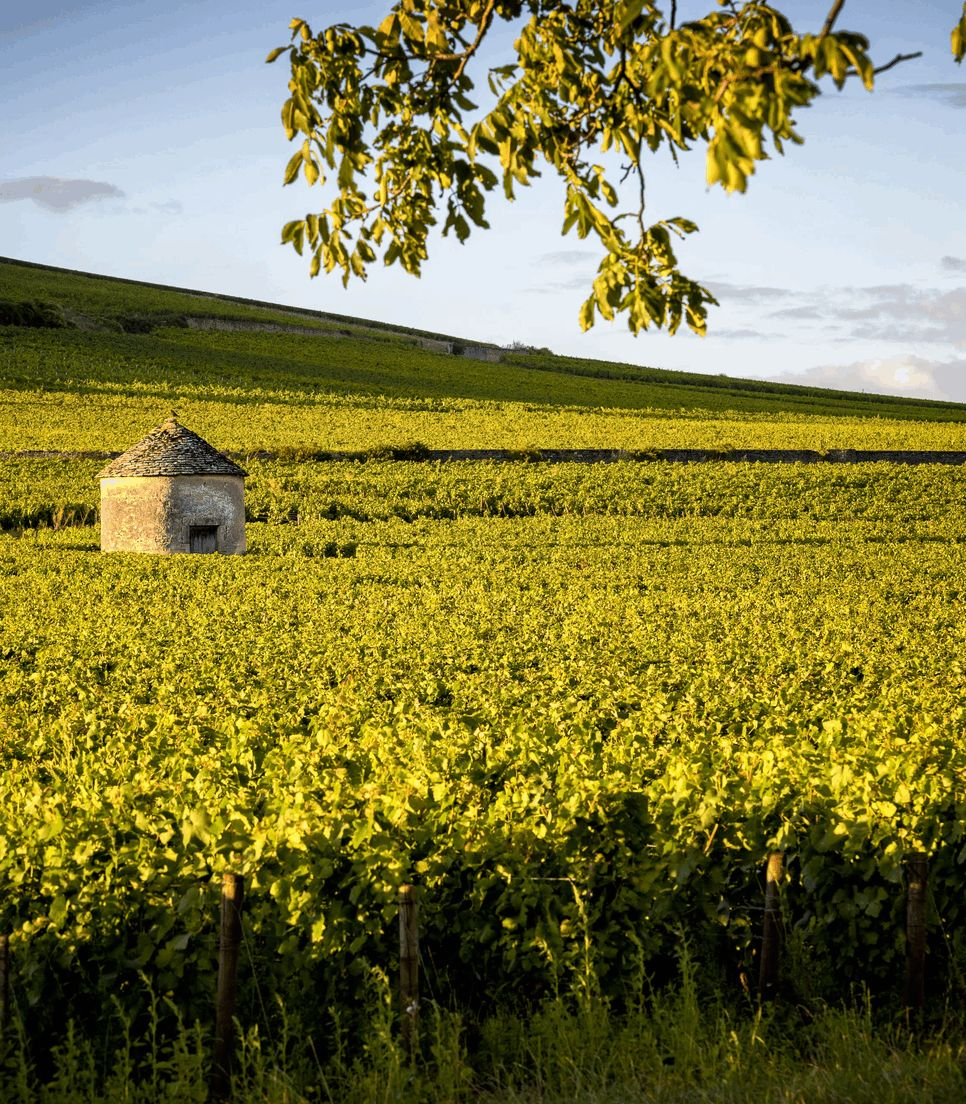 Cycle around and stay in Beaune for a few nights of the tour