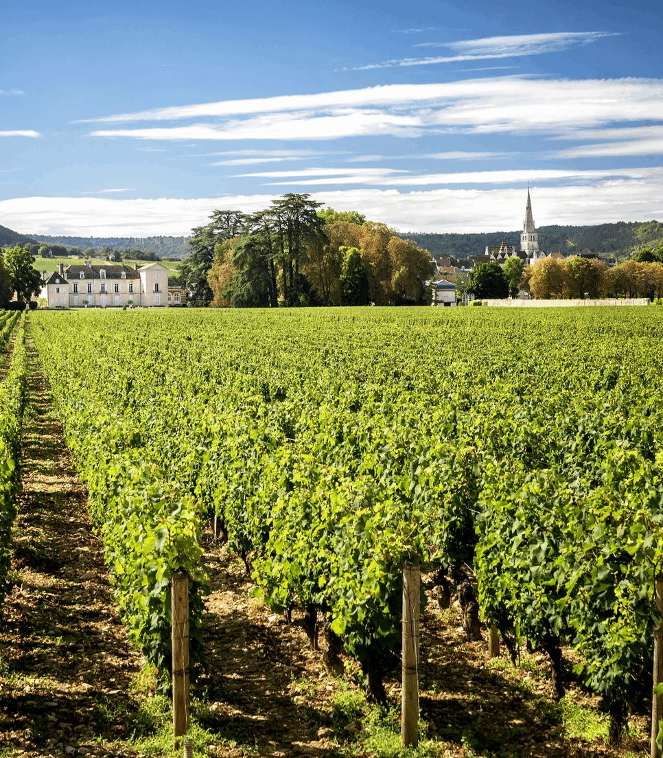 Cycle through the Meursault vineyards on day 4