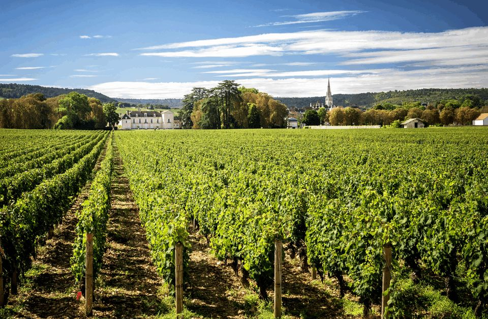 Burgundy Guided Bike Tour