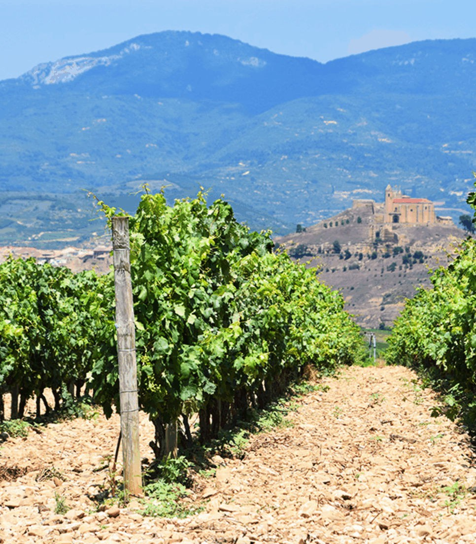 Explore this famed and beloved wine-producing area
