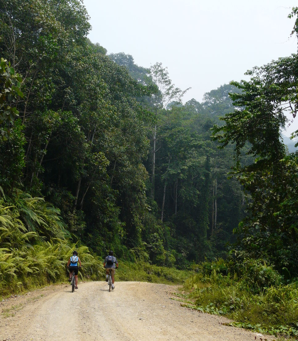 Get enthralled in the presence of the dense jungle