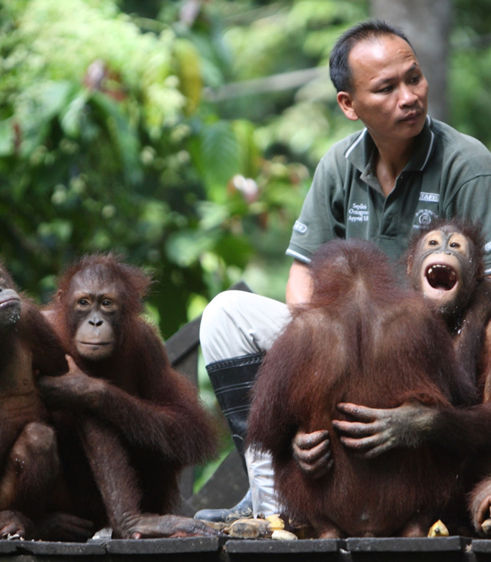 Get up close and personal with Borneo's inhabitants