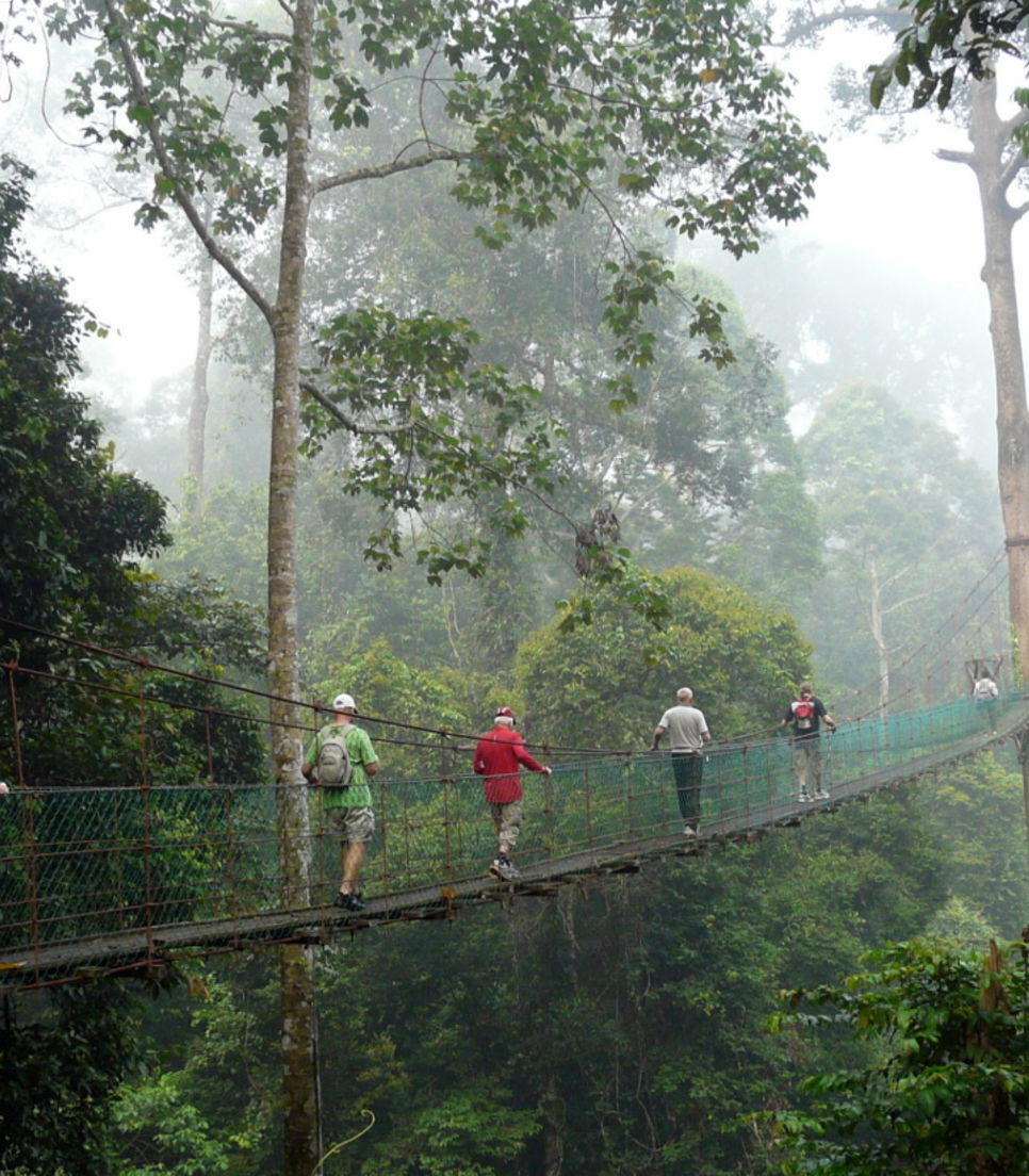 Explore the rainforest from a different perspective