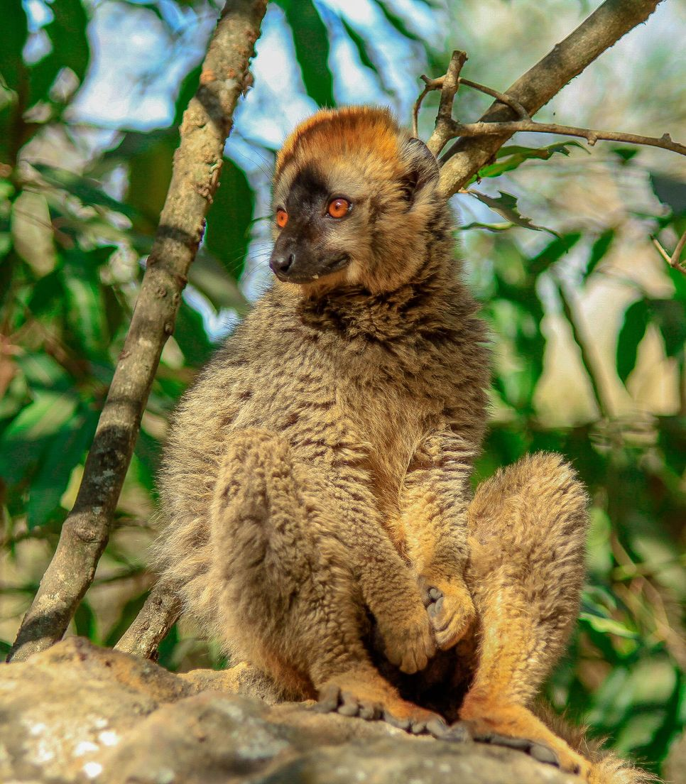 Spend day 12 hiking this spectacular national park and spotting lemurs