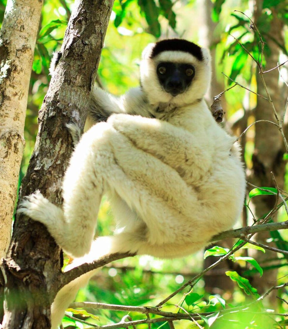 Spot the lemurs as you trek through Ranomafana rainforest