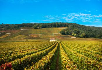 Bike and Wine Weekend in Burgundy